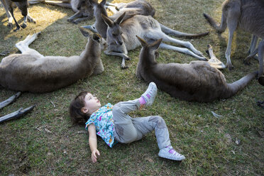 Australia, Brisbane, little girl lying on a meadow with group of tame kangaroos - GEMF02682