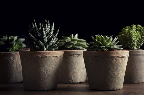 Close-up of potted succulent plants on table against black background - CAVF60604