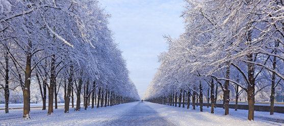 Germany, Hanover, Herrenhaeuser Gaerten, snow-covered alley in winter - KLRF00778