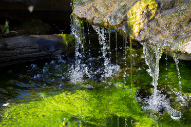 Wasser, Wasserfall, Quelle, Wassertropfen, Rana Esculenta, Frosch, Natur, Nachhaltigkeit, Moos, Erfrischung, Gesundheit, grün, Botanischer Garten Würzburg - NDF00846
