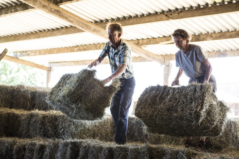 Two farmers stacking hay bales in a barn. - MINF09729