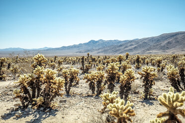 USA, California, Los Angeles, Joshua Tree National Park in sunshine - DAWF00861