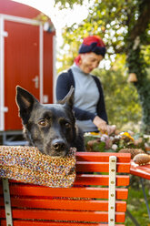 Portrait of black dog in the garden with owner in the background - OJF00297