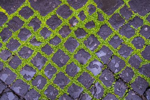 Italy, Rome, cobblestone pavement, overgrown - HAMF00552