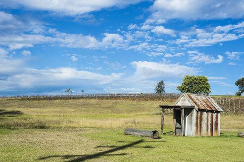 Australia, New South Wales, vine region of Hunter valley - RUNF00424
