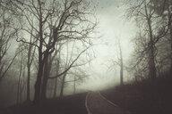Park, empty path and fog - DWIF00964