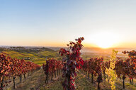 Germany, Baden-Wuerttemberg, Stuttgart Untertuerkheim, View to Rotenberg, vineyards in autumn at sunset - WDF04963
