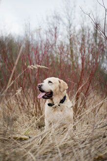 A dog looking away in a field - INGF10479