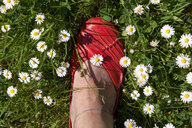 High angle view of a woman wearing red shoes in a field full of daisies - INGF10494