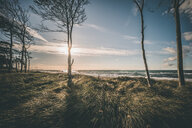 Scenic view of trees by the beach - INGF11055