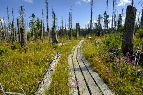 Germany, Bavaria, Lower Bavaria, Schachten near Frauenau, Bavarian Forest, experience path Hochschachten - LBF02299