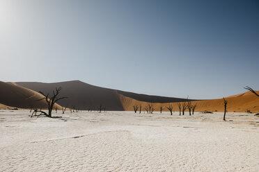 Namibia, Namib desert, Namib-Naukluft National Park, Sossusvlei, Deadvlei and Big Daddy Dune - LHPF00246
