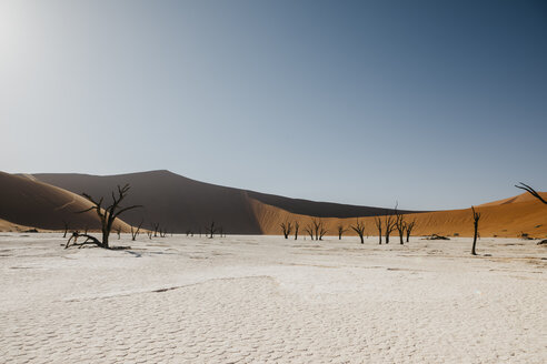 Namibia, Namib desert, Namib-Naukluft National Park, Sossusvlei, Deadvlei and Big Daddy Dune - LHPF00246