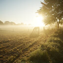 Nature view of a horse on a field during sunset - INGF11296