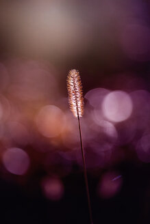 Close-up nature shot of a flowering plant against a blurred background - INGF11416