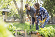 Smiling couple in vegetable garden - HEROF03255