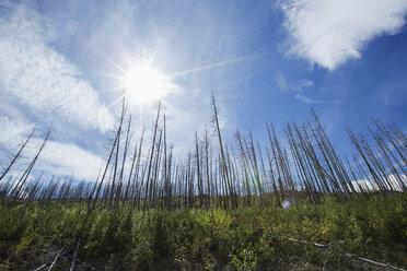 Sun shining over dead trees - HEROF03375