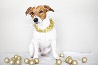 Portrait of dog wearing golden garland - JPF00335