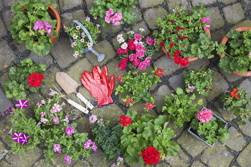 Various potted spring and summer flowers, gardening tools and gloves on cabblestone pavement, top view - GWF05734