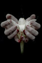 Close-up shot of a bloody hand holding a flower on a black background - INGF11477