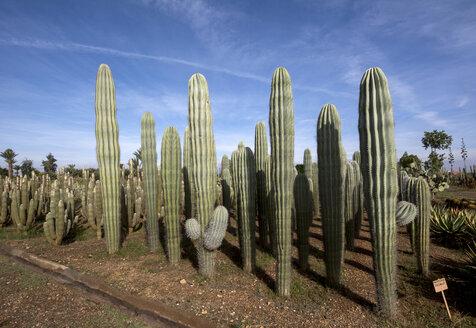 Morocco, Cactuses - LMJF00088