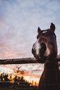 Animal portrait of a horse - INGF11892