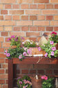 Various potted spring and summer flowers, gardening tools and gloves - GWF05759