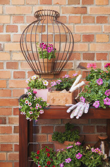 Various potted spring and summer flowers, gardening tools and gloves - GWF05762