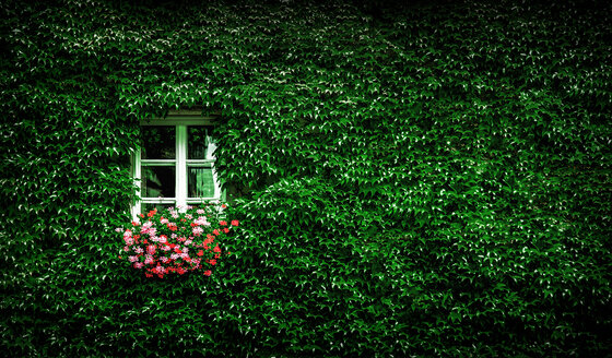Plants and flowers surrounding a window - INGF12069