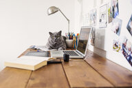 Portrait of Chartreux cat with laptop on table at home - ASTF00533