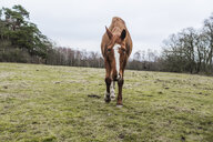 Portrait of horse on grassy field - ASTF01196