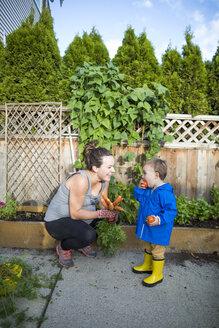 Baby boy eating tomato - AURF08142
