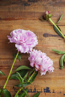 Pink peonies on wood - GWF05767