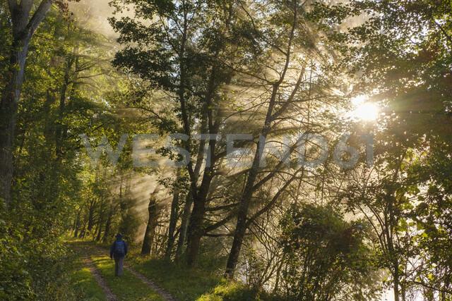 Germany, Upper Bavaria, Niederhummel, Nature Reserve Isarauen, female hiker at sunrise - SIEF08278 - Martin Siepmann/Westend61