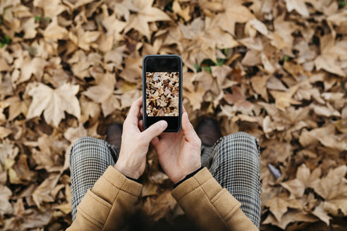 Close-up of man taking cell phone picture of autumn leaves - JRFF02299
