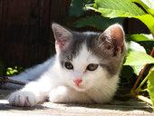 Kitten portrait - WWF04765