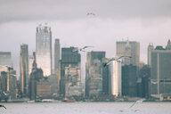 USA, New York, Panorama of Manhattan skyline, birds fly - OCMF00197