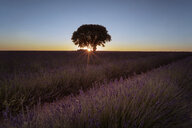 France, Provence, Lavender fields at sunset - EPF00521