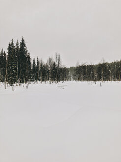 Finland, Lapland, Heavy Snowfall and Trees - JUBF00297