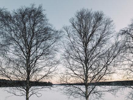 Sweden, Lulea, Two Trees at Winter Daybreak - JUBF00300