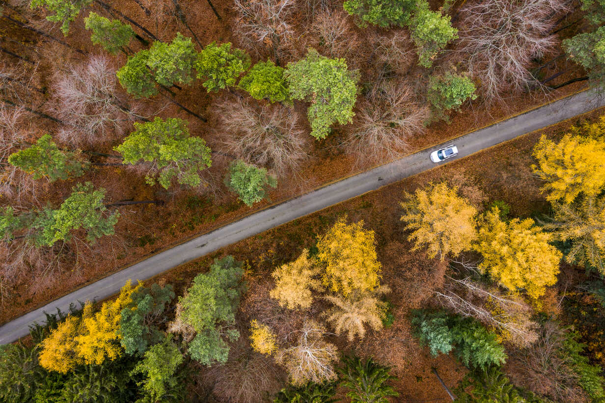 Germany, Baden-Wuerttemberg, Swabian Franconian forest, Aerial view of forest in autumn, forest road - STSF01821 - Stefan Schurr/Westend61