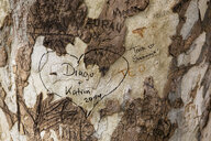 Heart shape and text on tree trunk - ASTF01363
