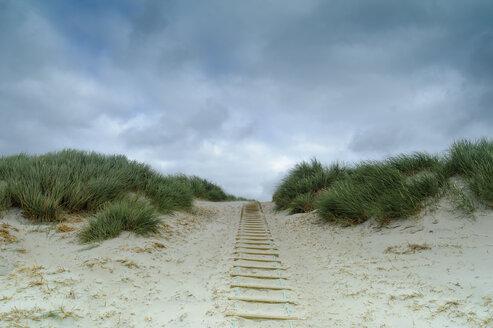 Denmark, Jutland, Henne Strand, dune landscape - UMF00864