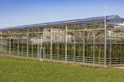 Germany, Fellbach, greenhouse with tomato plants and rucola plants on field - WDF05028