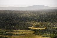 Forest landscape in Lapland, Sweden - FOLF09860