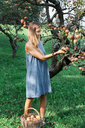 Woman picking apples from tree - CUF46831