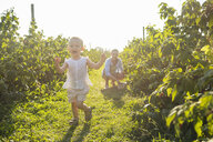 Mother and little daughter picking berries in summer - DIGF05591