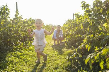 Deutschland, München, Mutter 36 Jahre, Kind 1 Jahr, Familie, Beeren pflücken, Natur, Sommer - DIGF05591