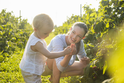Mother and little daughter picking berries together in summer - DIGF05597