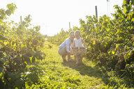 Deutschland, München, Mutter 36 Jahre, Kind 1 Jahr, Familie, Beeren pflücken, Natur, Sommer - DIGF05600